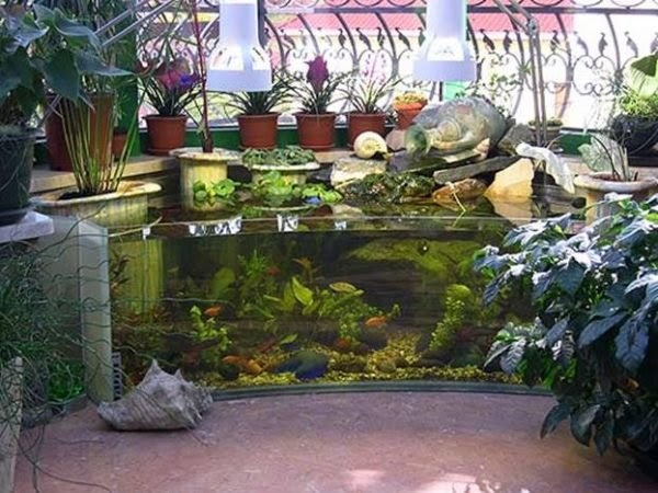 Inilah 5 Inspirasi Desain Kolam Ikan Minimalis untuk Mempercantik Halaman Rumah Anda