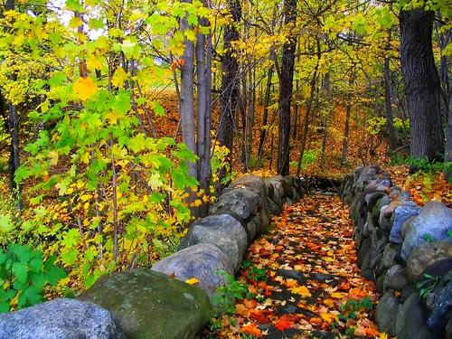 Autumn Proctor Park, Utica
