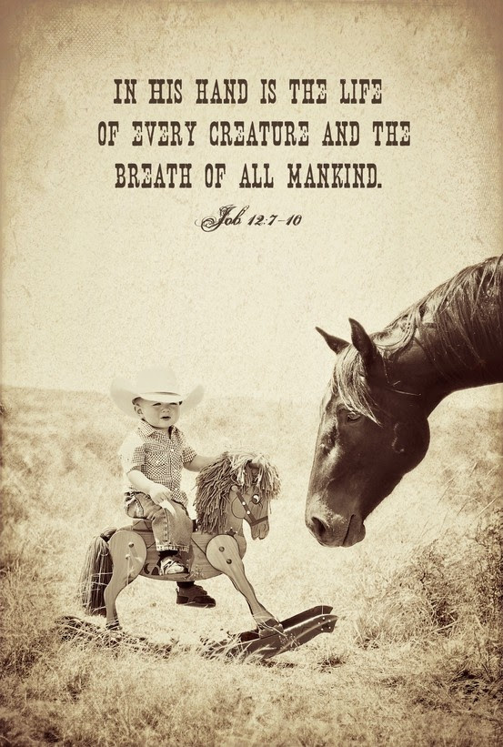 Quotes About My Cowboy 33 Quotes