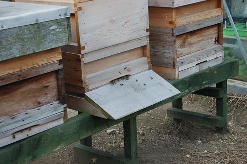 beehives Apr 13