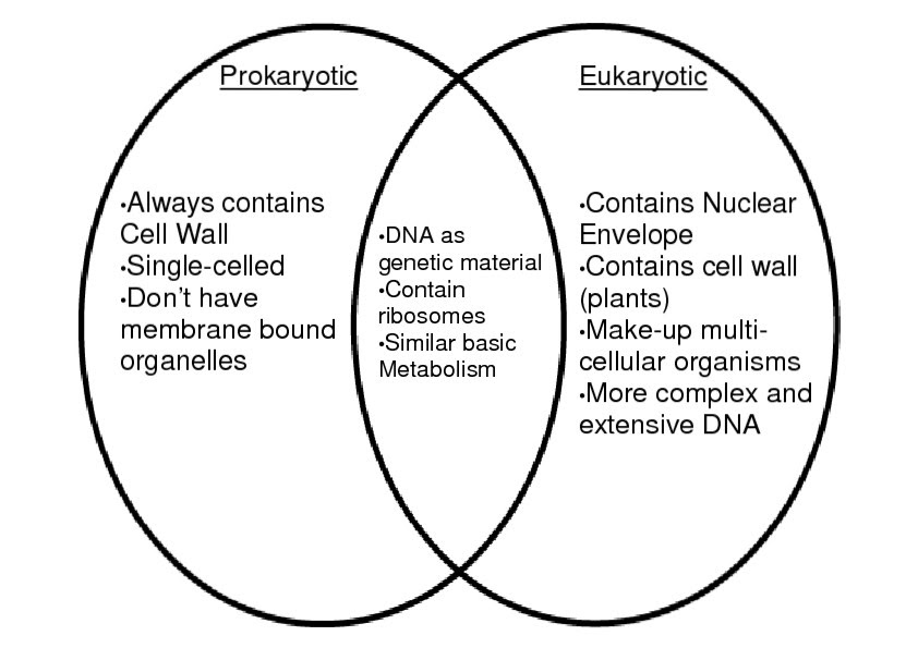 Prokaryotic Cells Vs Eukaryotic Cells Venn Diagram
