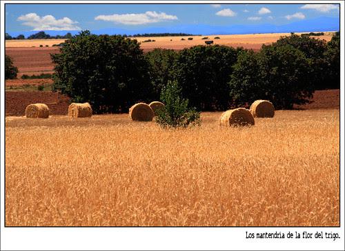 Campos de León