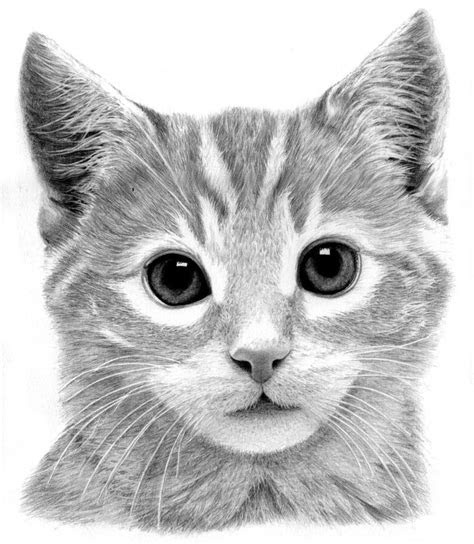 kitten drawing cute black cat pictures  draw litle pups