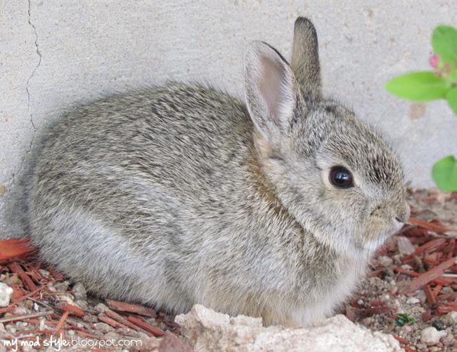 Baby Bunny3