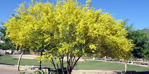 Heres When And How To Prune Your Trees In Arizona