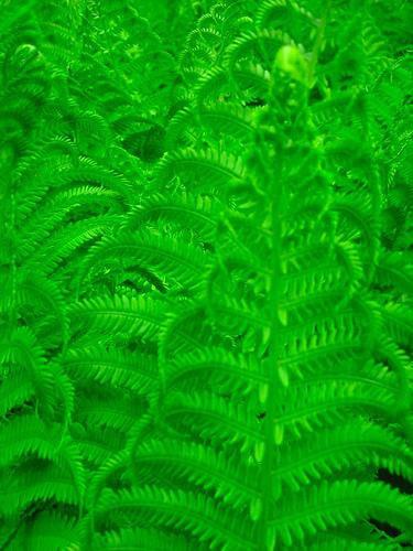 Floresta Fractal  (Walt Stoneburner)