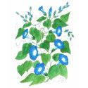 Blue, White, Green Ladies T-shirt, Morning Glories zazzle_shirt