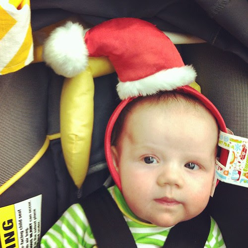 trying to get him in the holiday spirit but #griffinscoutisnotimpressed