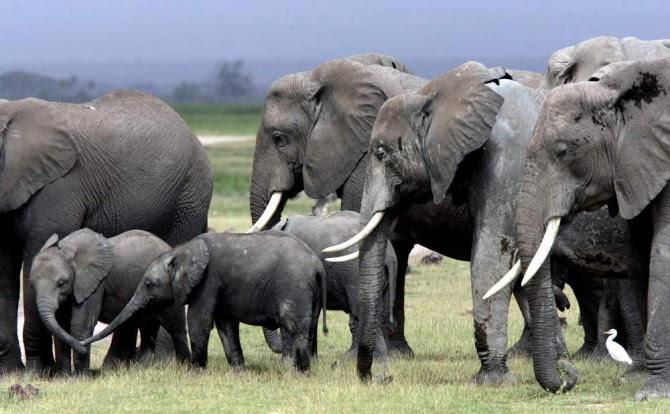 Elefantes_sabana[1]