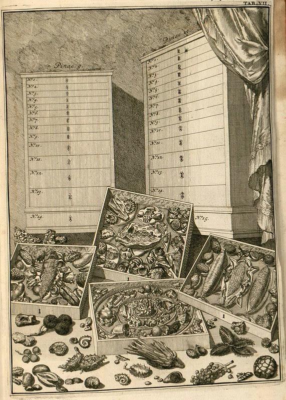 cabinet of wonders engraving