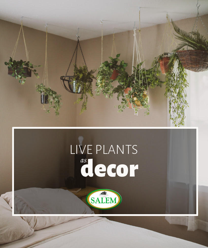 Design Highlight: Bedrooms Using Live Plants as Decor ...