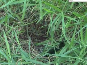 Empresário foi encontrado morto em matagal na Bahia (Foto: Reprodução/TV Bahia)