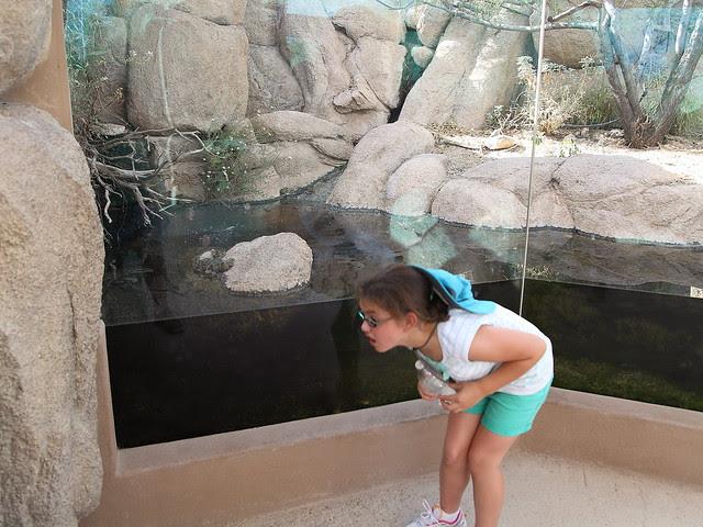Graci at Desert Museum 2-20130614