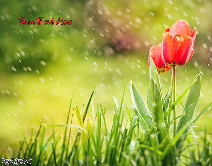 Write Quote On Spring Tulips And Rain Picture