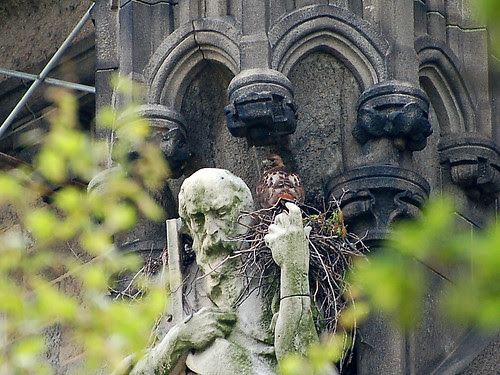 Cathedral Red-Tail