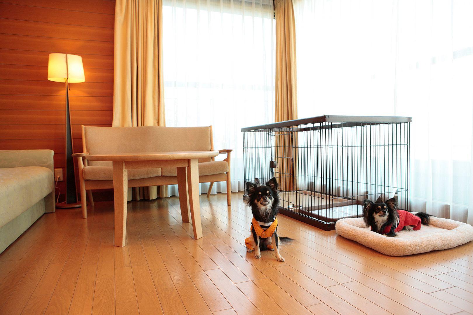 photo Hilton Odawara.jpg