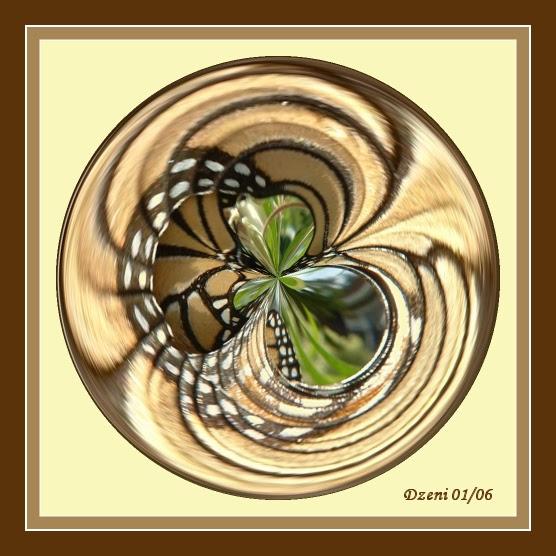 Circular Butterfly
