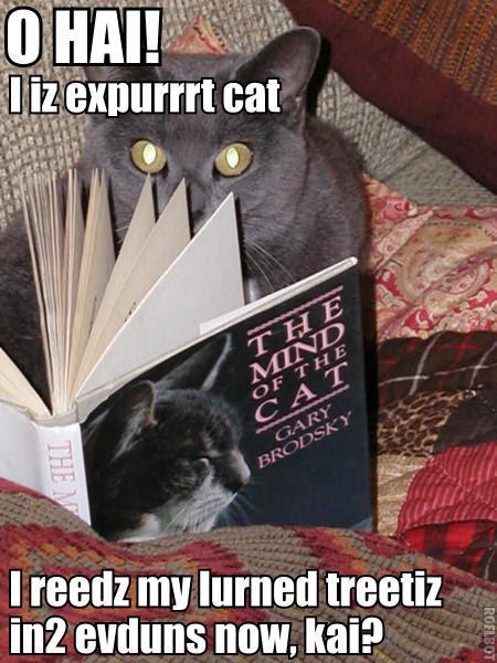 expert LOLcat