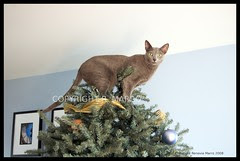 Look Mom, a new star on top of the tree