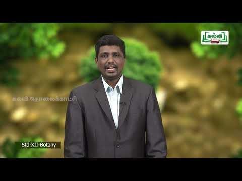 12th Botany உயிரி தொழில்நுட்பவியல் நெறிமுறைகளும் செயல் Kalvi TV