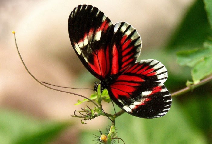 1251913628_56_butterfly_beauty (700x475, 252Kb)