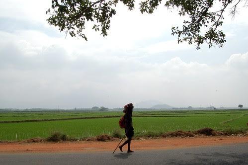 An einer Strasse in der Reisschüssel Indiens geht ein einzelner Pilger