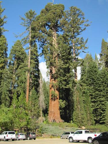 IMG_4061_Grant_Grove_Sequoia_NP
