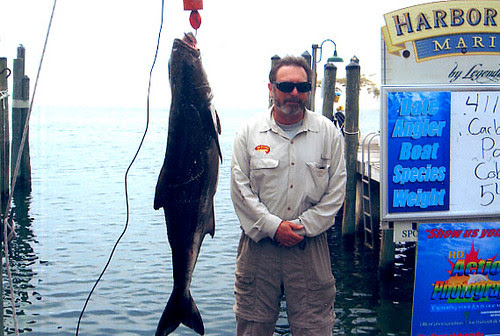 Carlo and a 54 Pound Cobia
