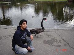 Bersama Black Swan Kat Dalam Royal Botanic Garden, Melbourne, Australia
