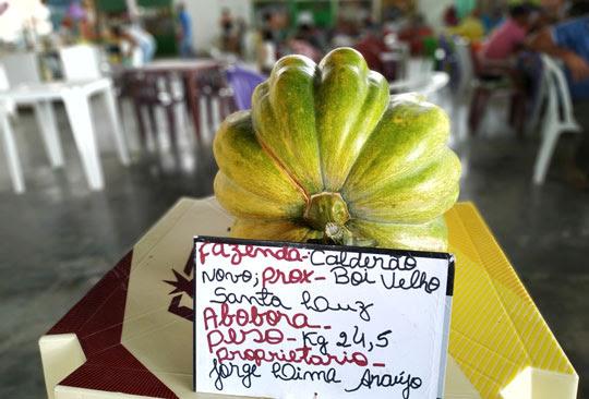 'Abóbora gigante' foi exposta pelo agricultor na feira livre da cidade | Foto: Notícias de Santaluz