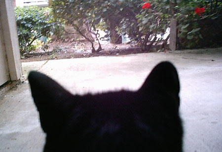 as seen through the eyes of a cat