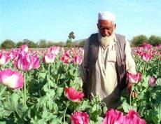 An Afghan man walks through a poppy field in the Nangharhar province of Afghanistan.