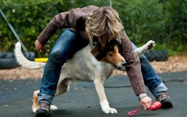 Kostenlose Hunde Spiele