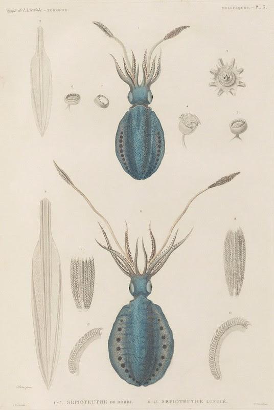 Voyage de la Corvette (atlas) by Jules Dumont d'Urville, 1833 b