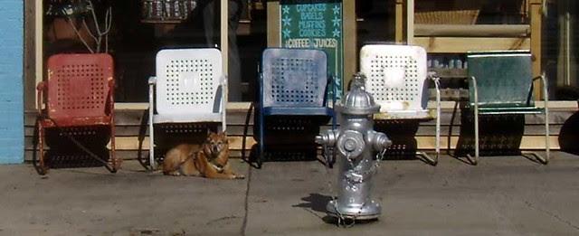 P1211755-Fleemans-Chairs-And-Dog
