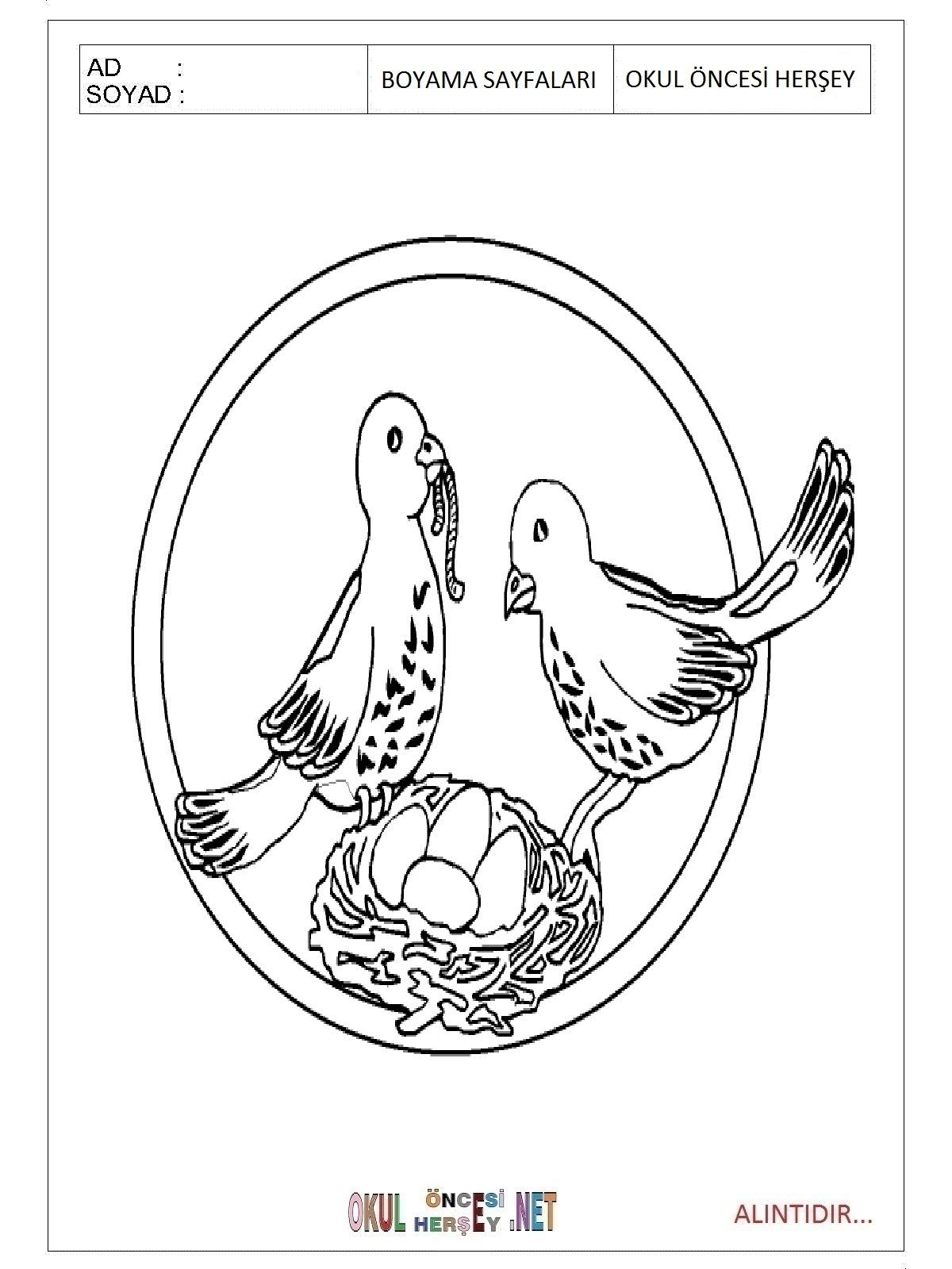 Güvercin Boyama Sayfaları