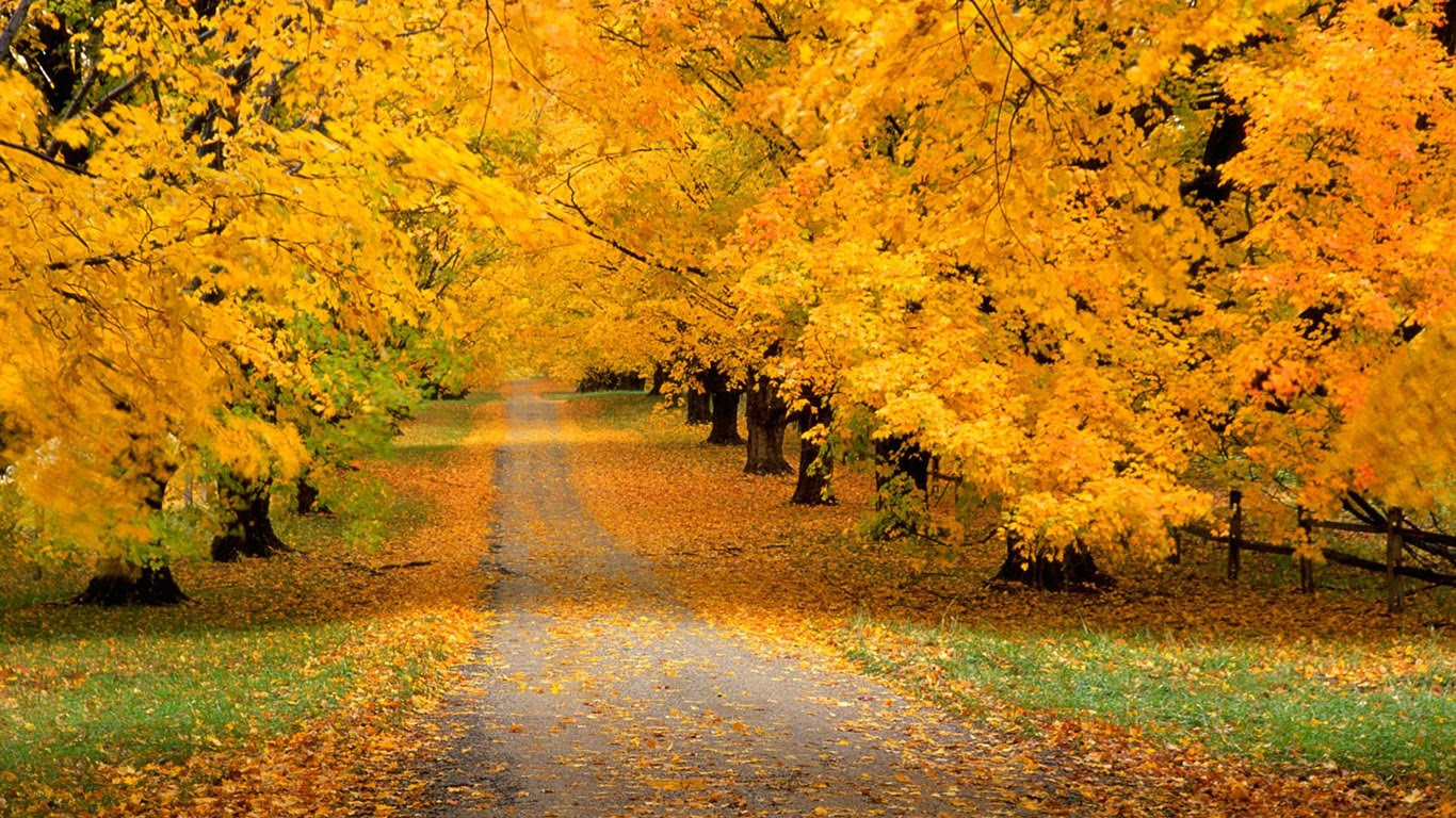 秋の風景の美しい壁紙 16 1366x768 壁紙ダウンロード 秋の風景の