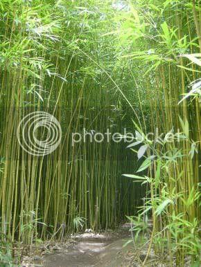 As sete verdades do Bambú,poemas,poesias,frases,mensagem motivacional,mensagens de reflexão