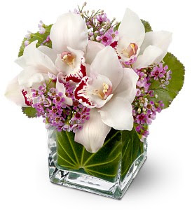Teleflora's Lovely Orchids in MississaugaON, Euro Flowers