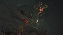 Coral dañado. | PNAS