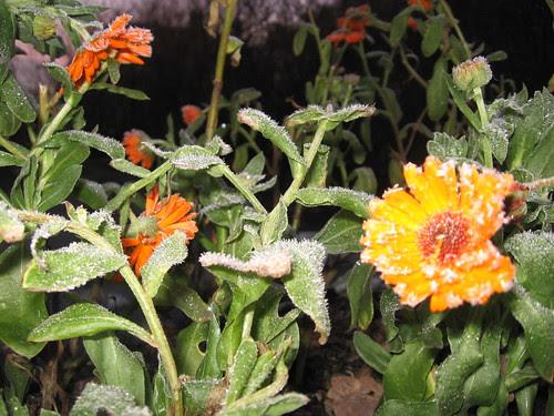 Hagen i desember