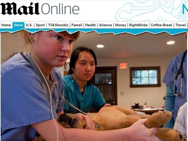 Após as lesões, entre 2 a 7 dias, os animais tiveram sintomas de depressão grave, perda de apetite e vômitos, seguidos por deficiência renal e morte Foto: Daily Mail / Reprodução