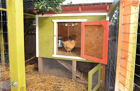 Chicken Co-op Plans