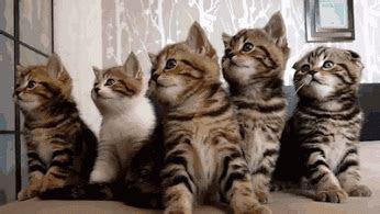 kucing lucu gif galeri foto  wallpaper terbaik