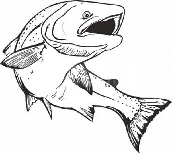 pesci da colorare disegno 181