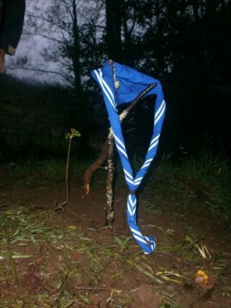 A plántula de sabugueiro plantada pola Unidade Esculta do Chan en Narahío