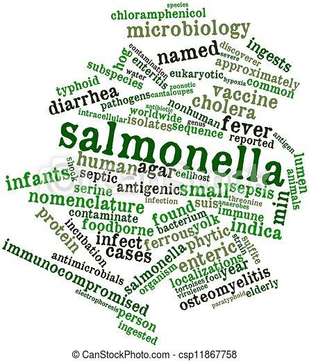 Image result for salmonella graphic