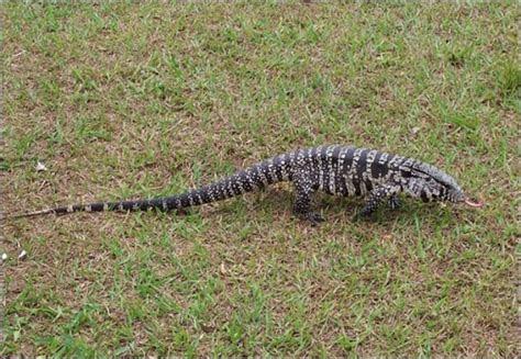 Top 10 Weirdest Invasive Species In Florida ? myscienceacademy.org
