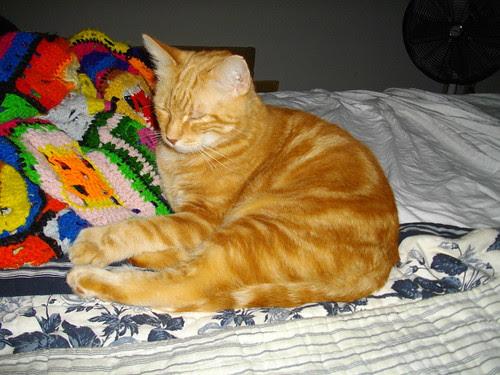 Nardo on bed (2)