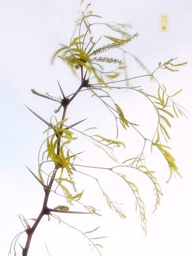 Mesquite/Movement/Meditation